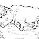 Rinoceronte para colorear | Vida salvaxe