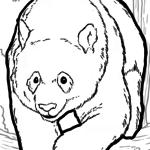 Coloring page Panda