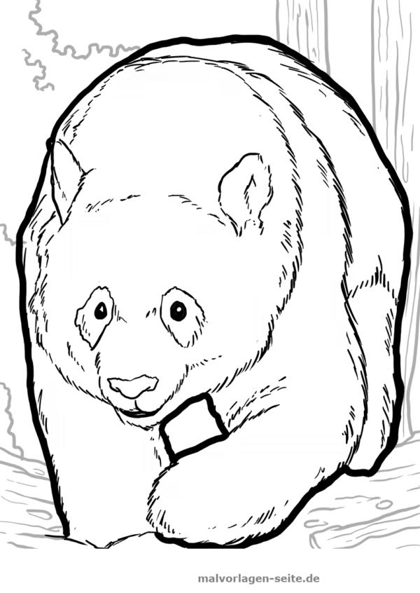 Malvorlage Panda