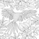 Coloring page parrot | animals