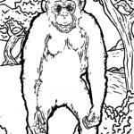 Coloring page chimpanzee monkeys