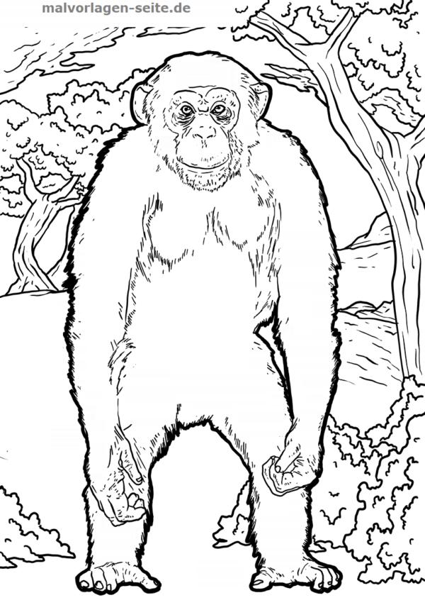 Malvorlage Schimpanse