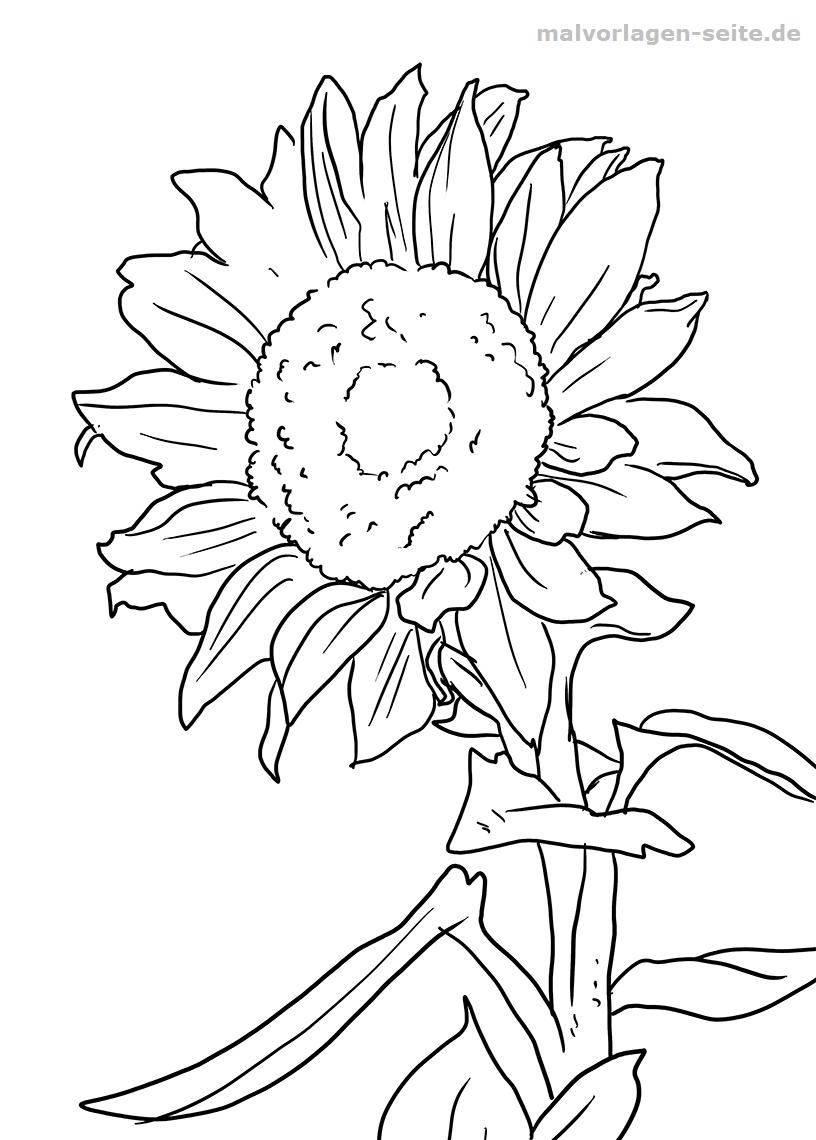 Malvorlage Sonnenblume | Gratis Malvorlagen zum Download