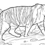 Coloring page Tiger | animals