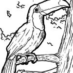 Malvorlage Tukan | Tiere