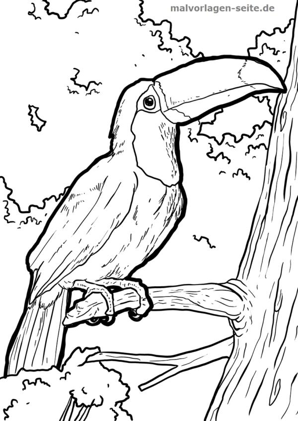 Farveside toucan fugl