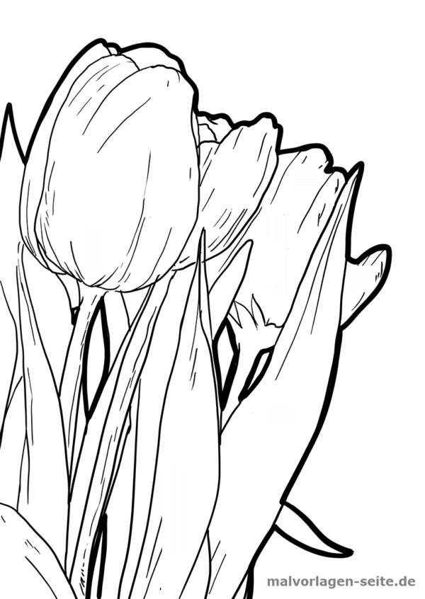 Malvorlage Tulpen Pflanzen