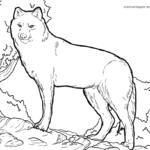 Malvorlage Wolf | Tiere