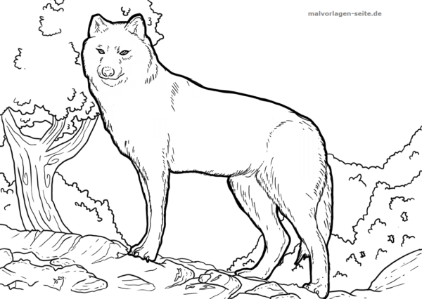 Dibujo para colorear Lobo | Páginas para colorear gratis para descargar
