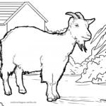 Životinje na farmi bojanka