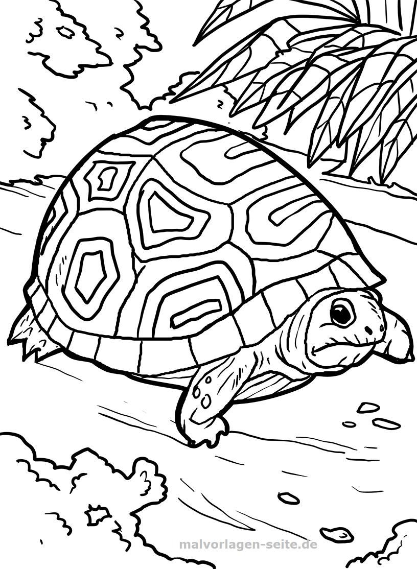 Malvorlage Schildkröte | Gratis Malvorlagen zum Download