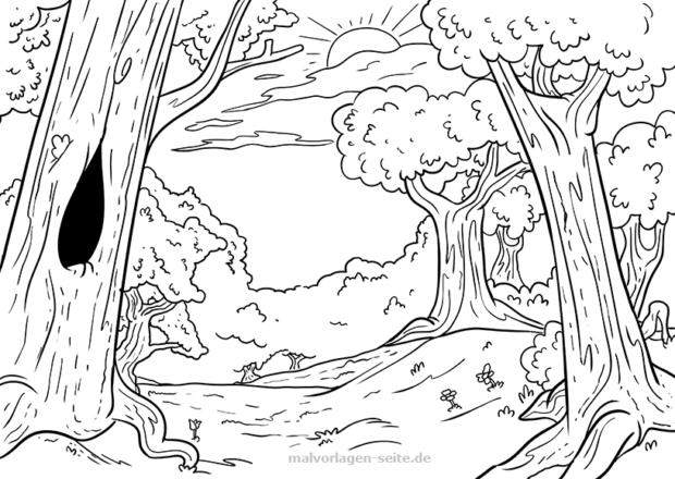 Malvorlage Wald und SonneMalvorlage Wald und Sonne
