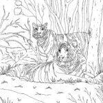 Halaman mewarnai Tiger | hewan