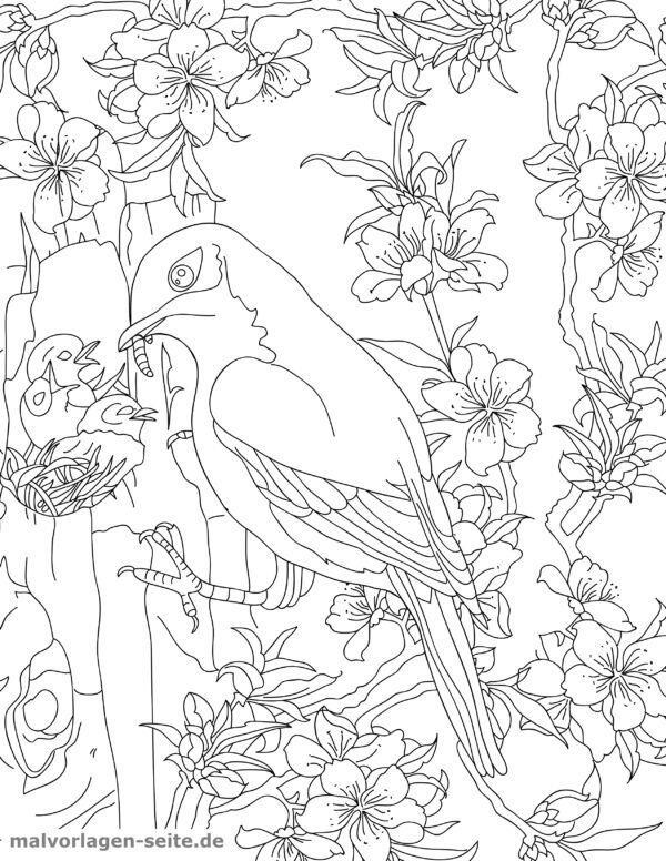 Coloring page for adult bird nest