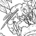 Coloriage abeille | Animaux
