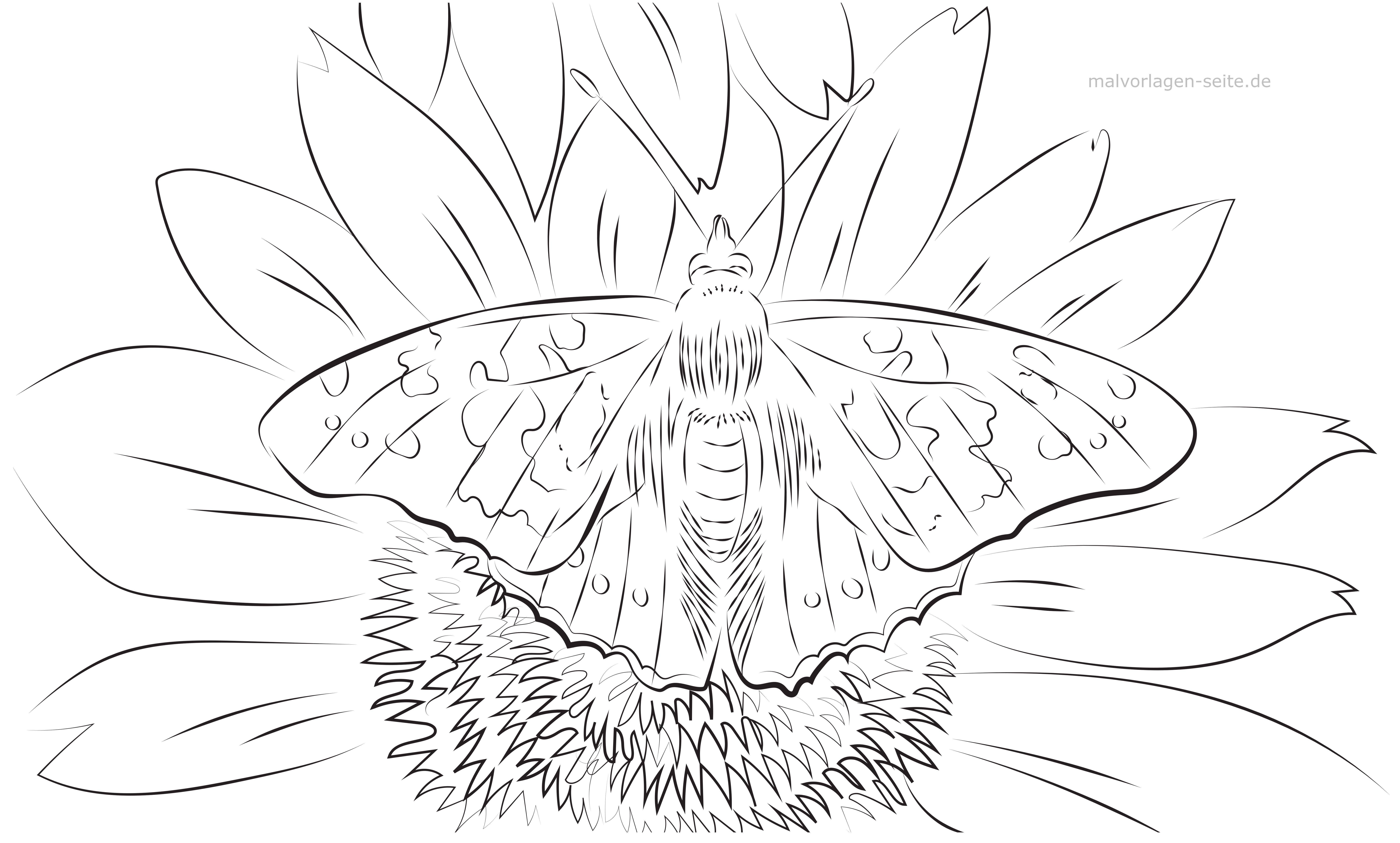 Malvorlage Erwachsene Schmetterling auf Blume | Gratis Malvorlagen ...