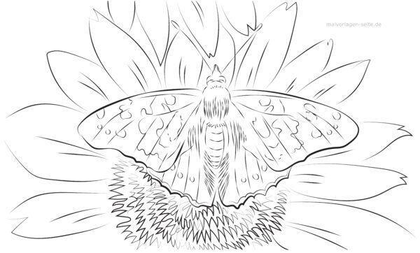 Página para colorear mariposa adulta en flor | Páginas para colorear ...