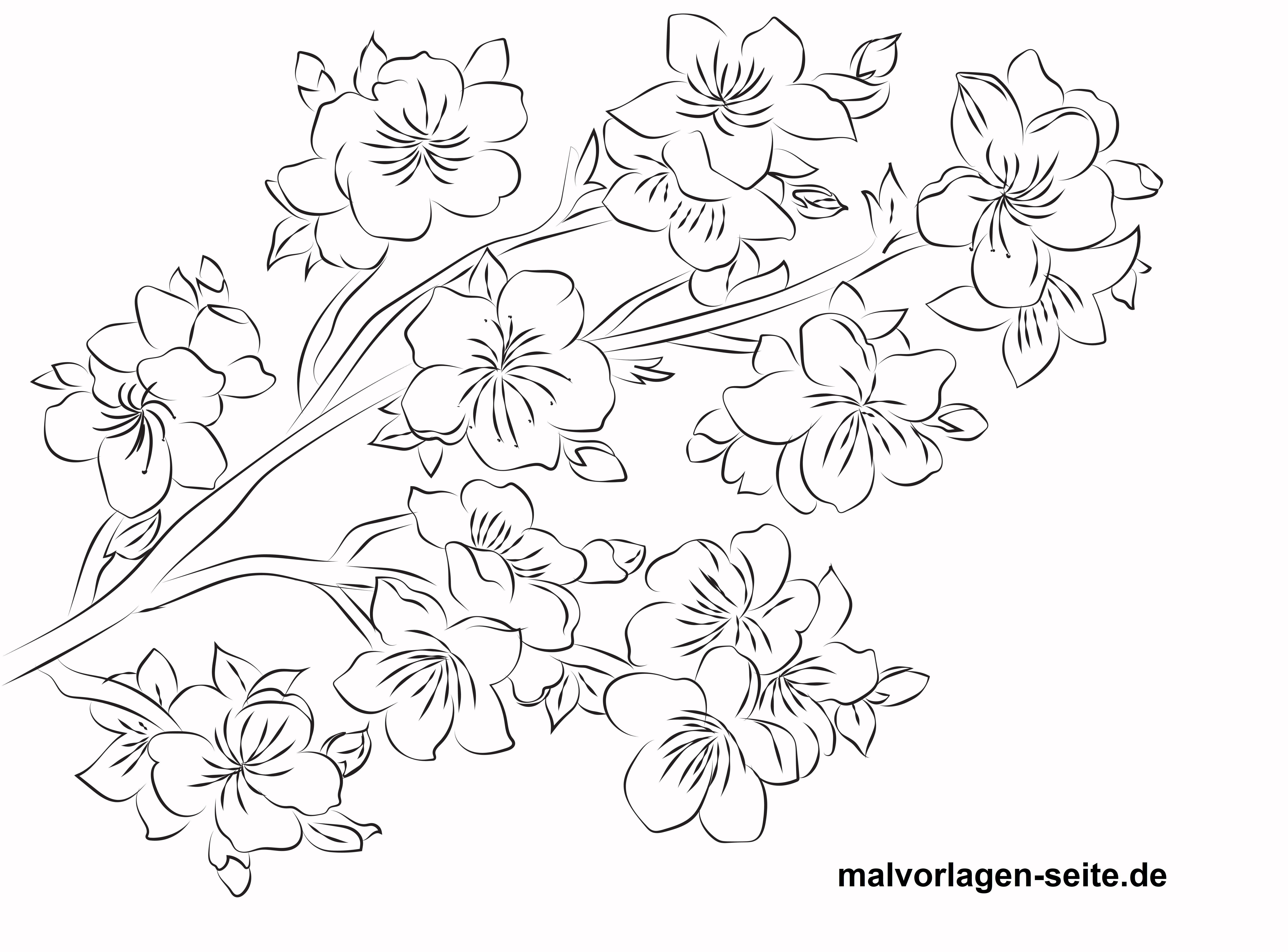 Malvorlage Kirschblüte für Erwachsene - Kostenlose Ausmalbilder