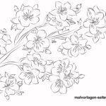 Malvorlage Kirschblüte für Erwachsene