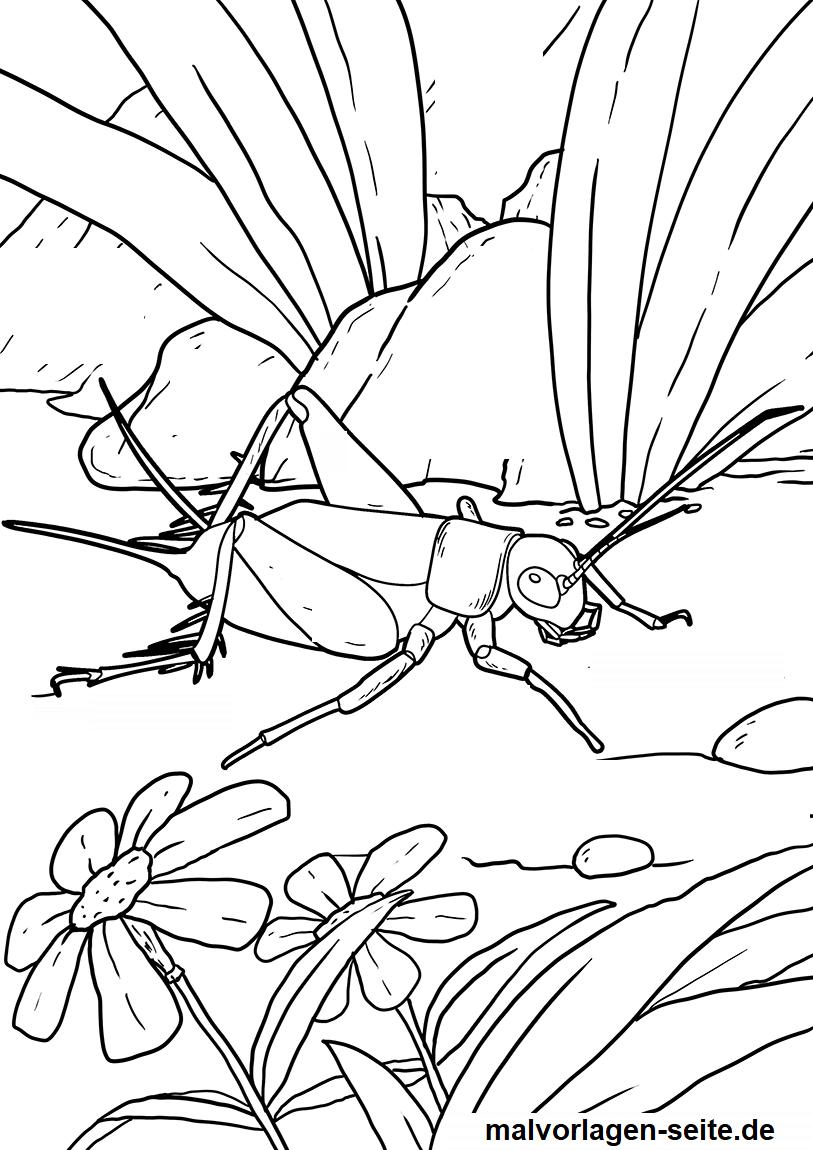 Malvorlage Heuschrecke  Insekten - Kostenlose Ausmalbilder