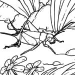 Barevná stránka kobylka hmyz