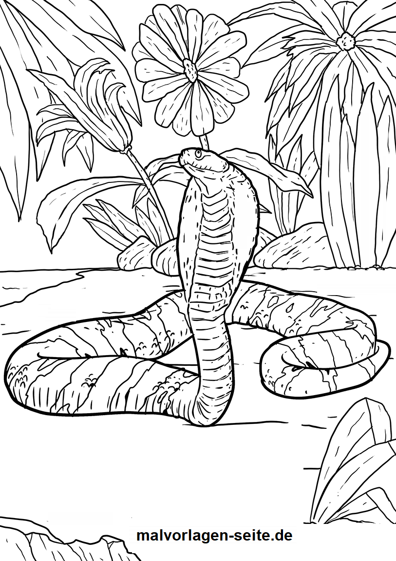 malvorlage kobra tiere kostenlose ausmalbilder