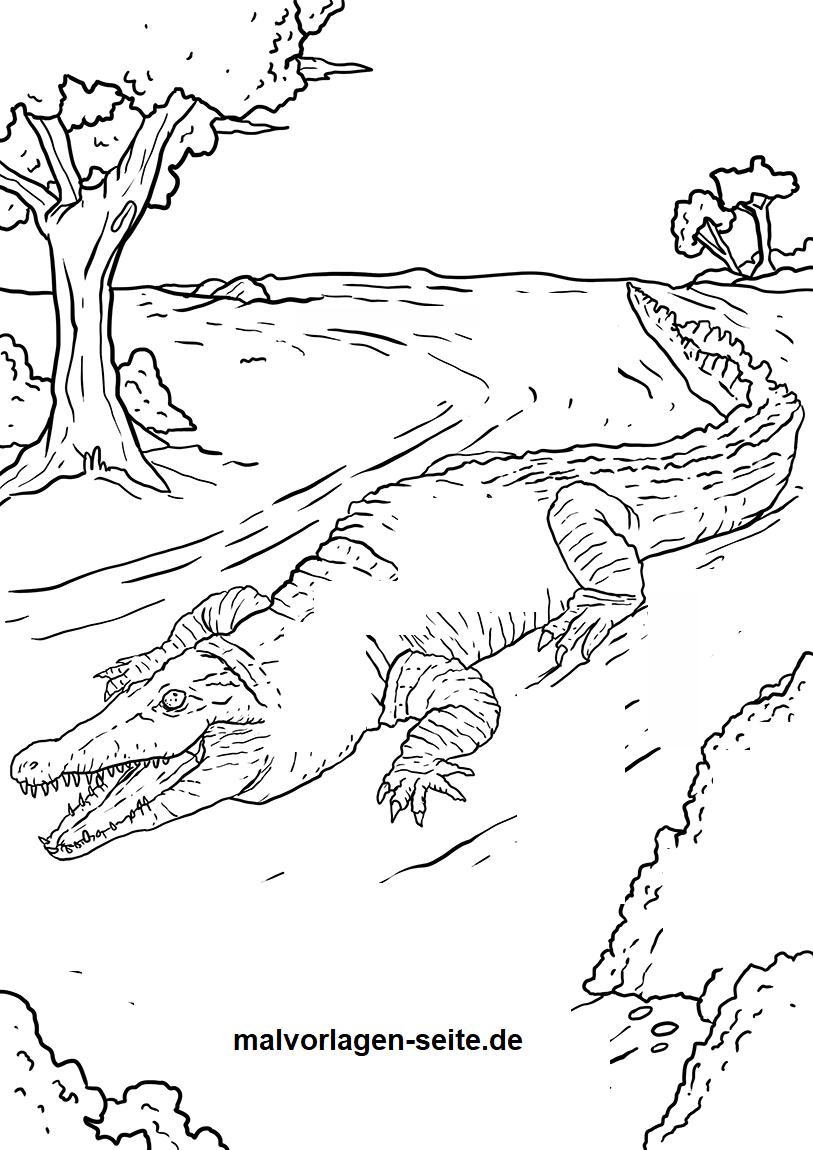 Malvorlage Krokodil Tiere