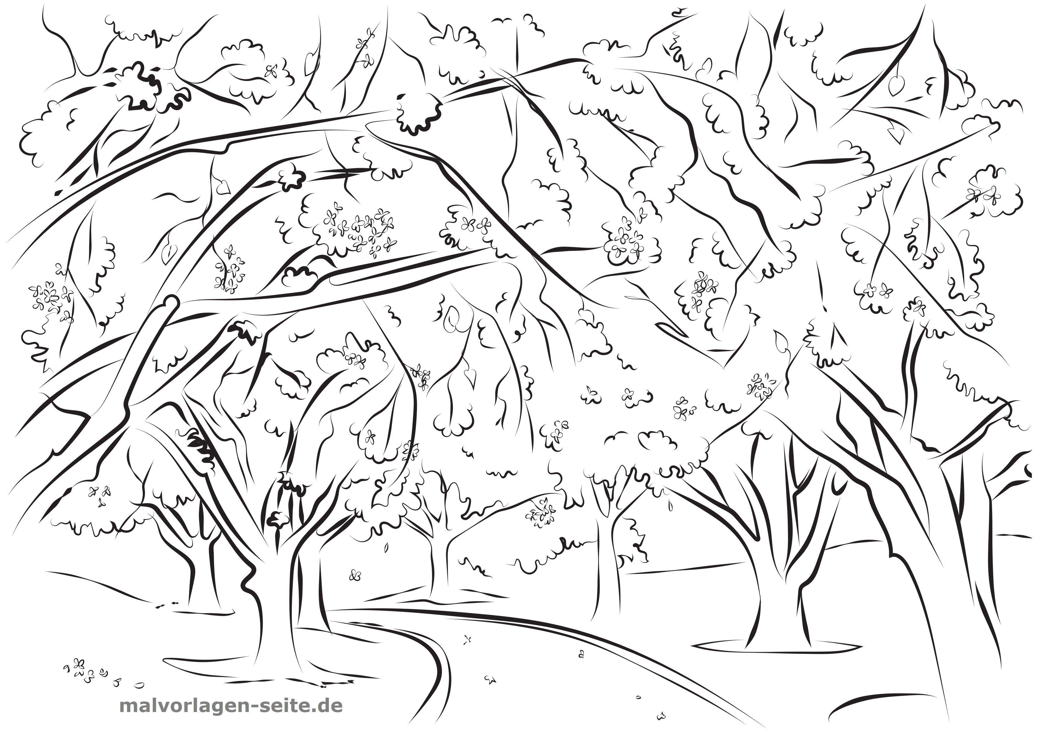 Malvorlage Erwachsene Kirschbaume Kostenlose Ausmalbilder