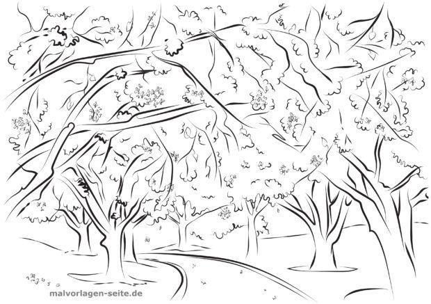 Mewarnai Halaman Pohon Ceri Dewasa Halaman Mewarnai Gratis Untuk