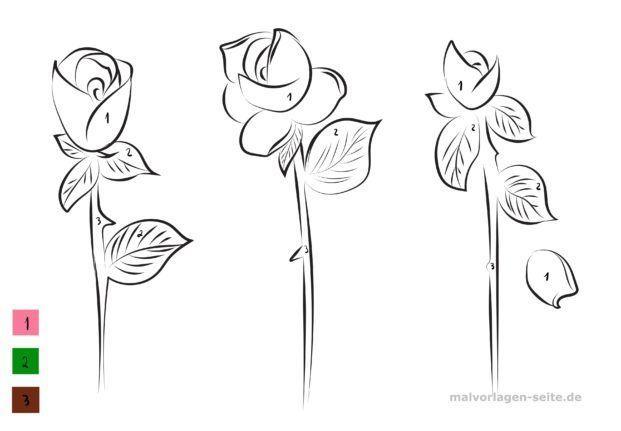 Malen nach Zahlen - Rose