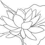Ukubala imbali yefowus yebalaji | plant