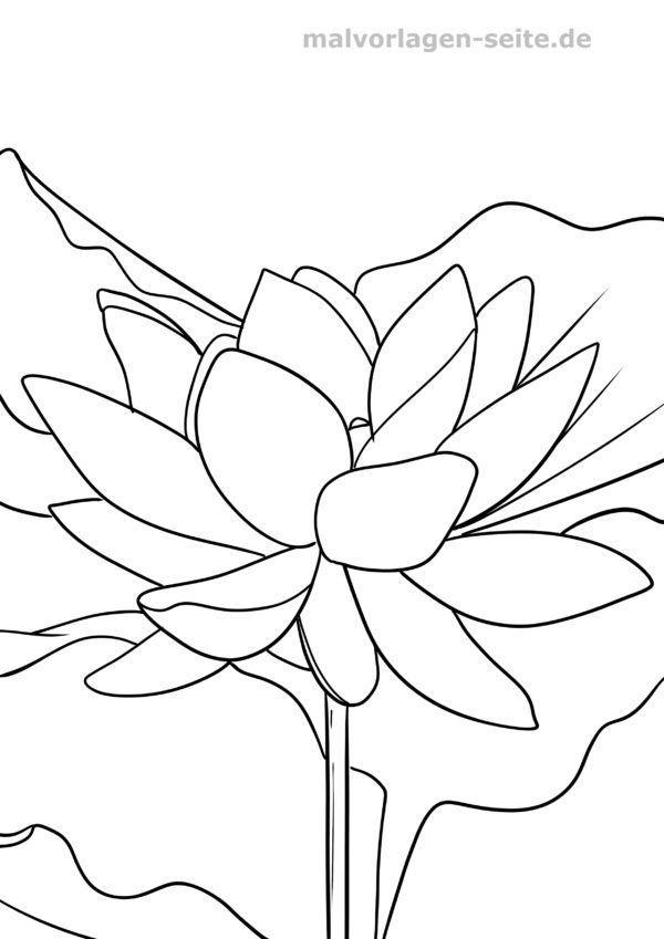 Dibujo para colorear flor de loto.