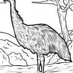 Coloring page emu for coloring