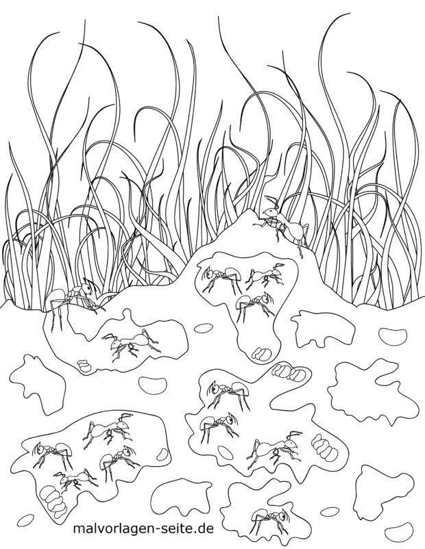 Malvorlage Ameisen