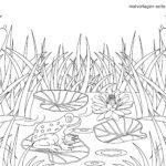 Malvorlage Frosch am See | Tiere