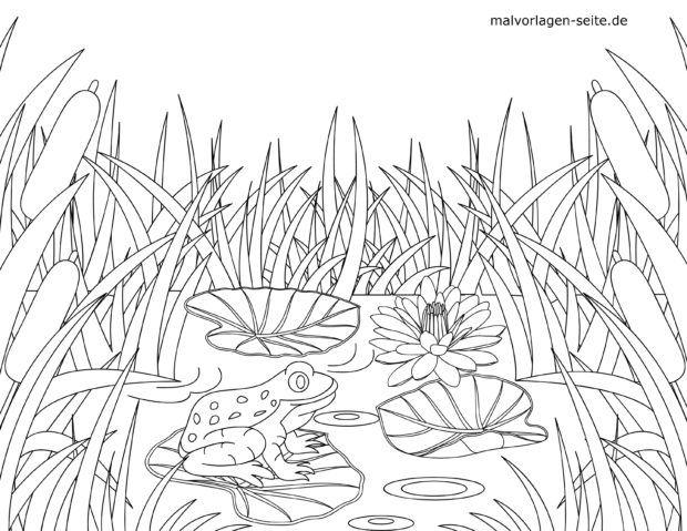 Coloring page Frog in the pond