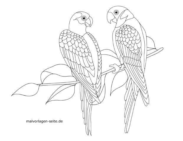 Coloring page parrots