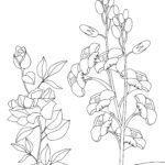 Malvorlage Blumenwiese Pflanzen