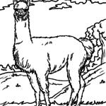 Planșă de colorat alpaca / llama - animale