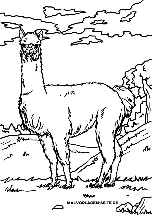 Malvorlage Alpaka / Lama