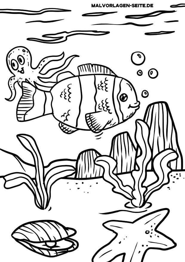 malvorlage clownfisch  fische  kostenlose ausmalbilder