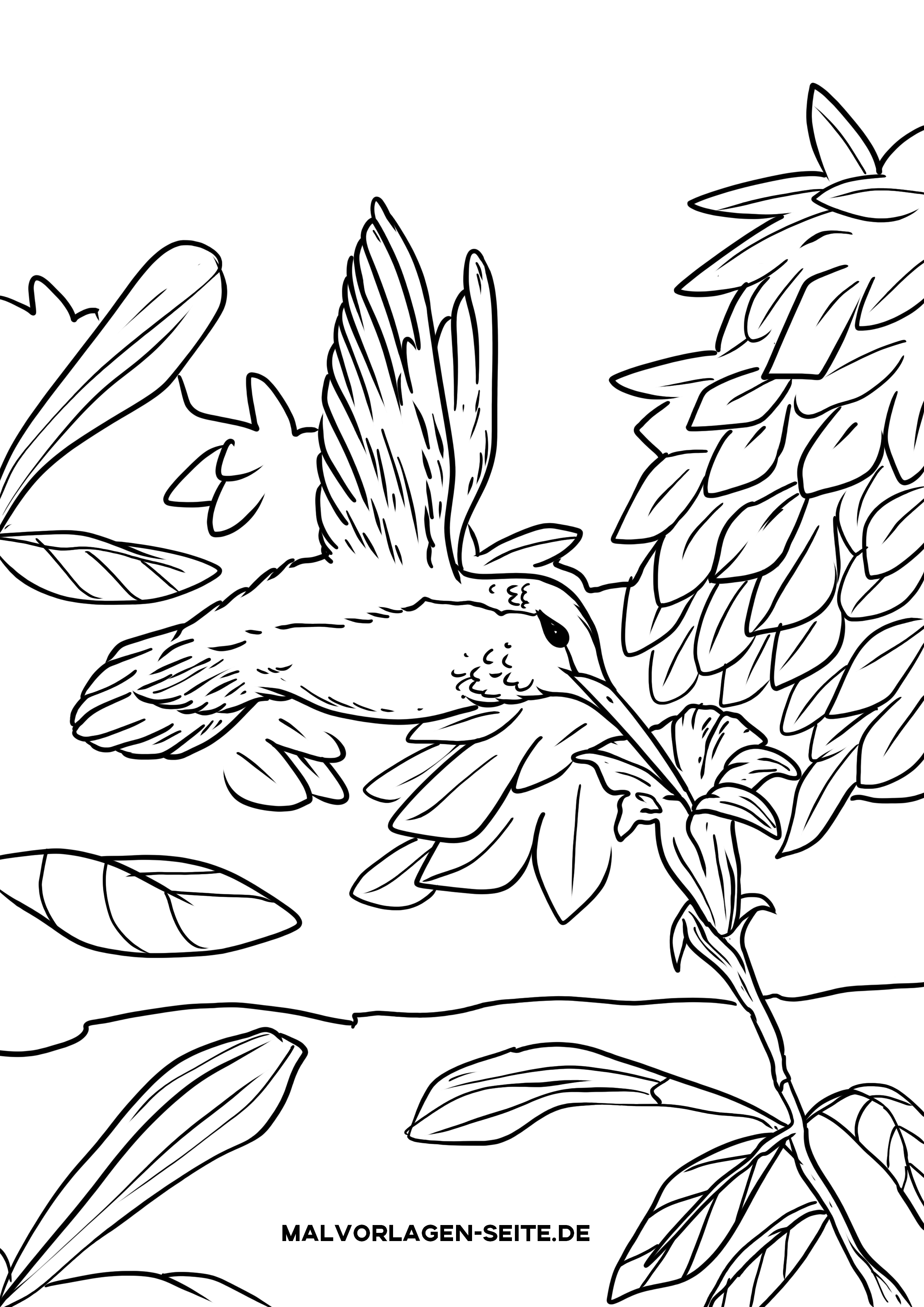 Malvorlage Kolibri  Vögel Tiere - Kostenlose Ausmalbilder