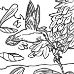 Coloring page Hummingbird | Birds animals