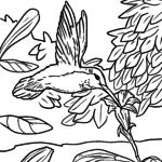 Värvimisleht koolibri | Linnud loomad