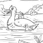 Coloring page duck with chicks for coloring