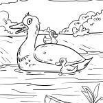 Malvorlage Ente mit Küken zum Ausmalen