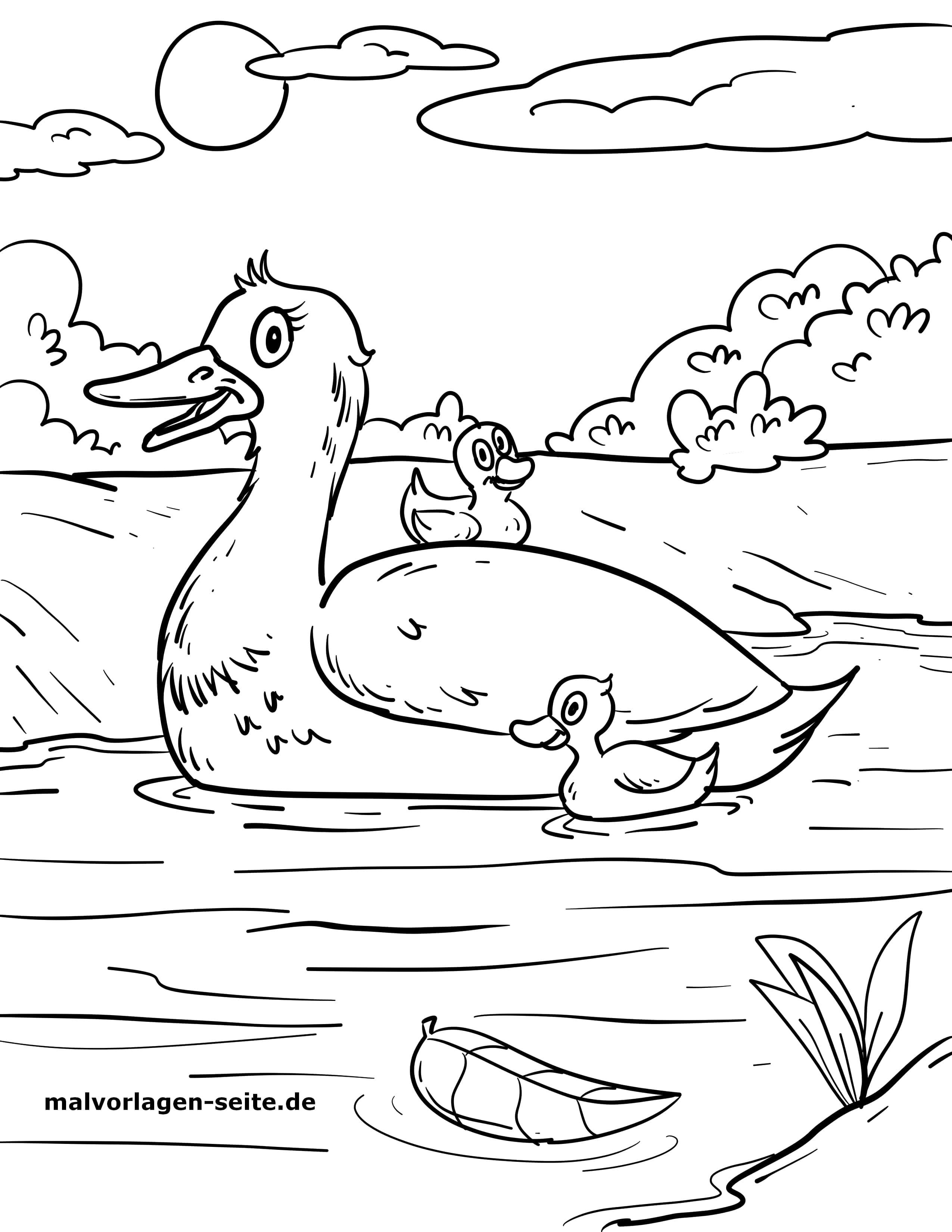 Malvorlage Ente  Vögel - Kostenlose Ausmalbilder