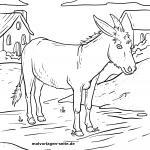 Farm animals coloring page - Donkey coloring page