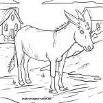 Bojanje stranica životinja na farmi - bojanje magarca