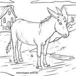 Coloriage âne   Animaux